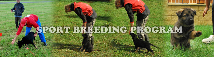 Sport Breeding Program